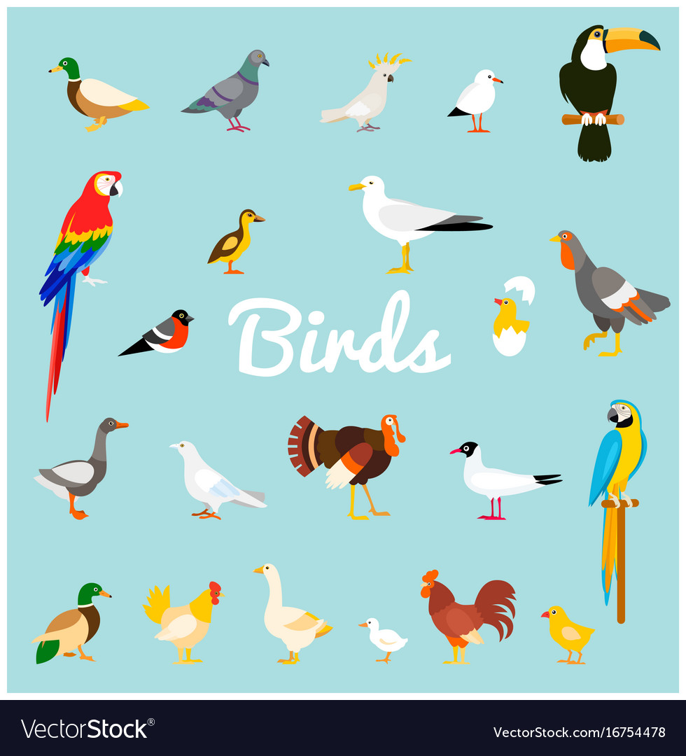 A set of domestic and wild birds in a flat style