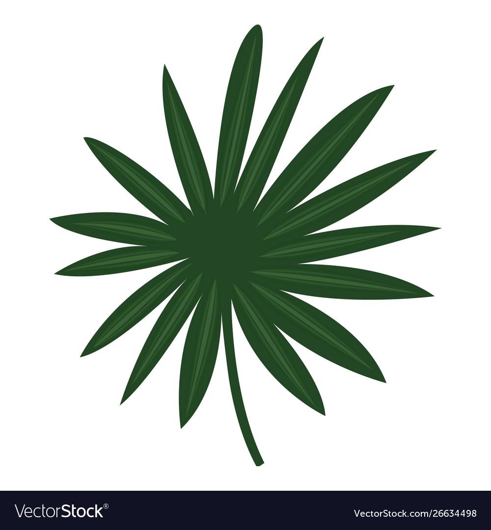 Fan palm leaf icon cartoon style