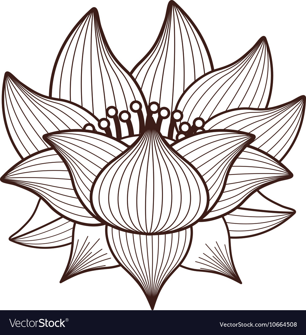 Isolated lotus flower design royalty free vector image isolated lotus flower design vector image izmirmasajfo