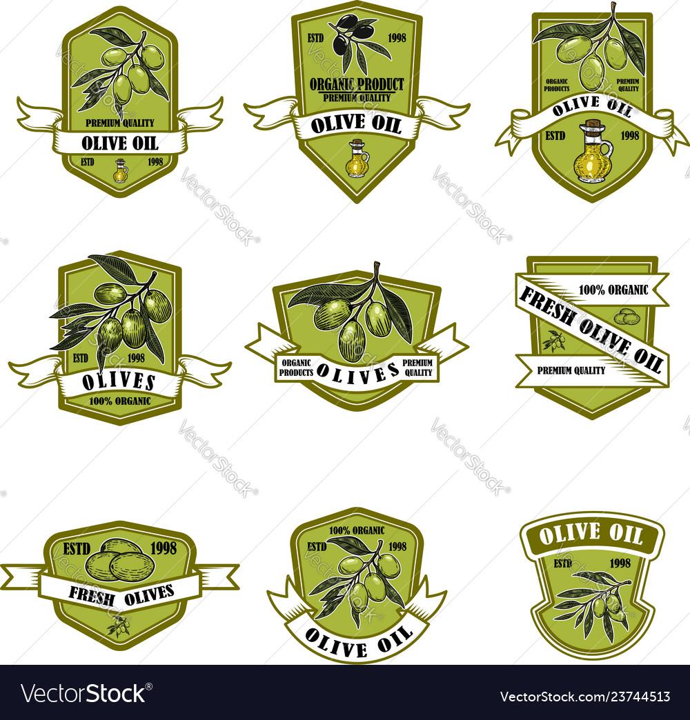 Set of vintage olive oil emblems design element
