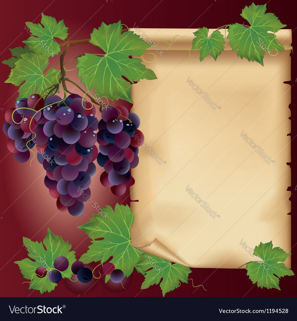Background with black grape and old paper
