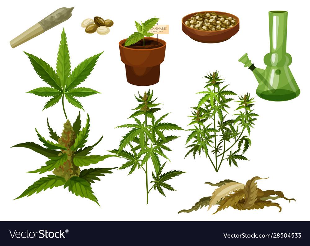 Set isolated marijuana leaf and hemp seeds