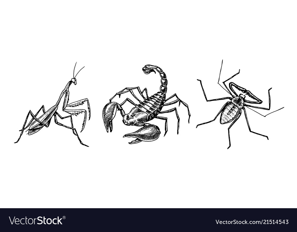 Big set insects scorpion whip amblypygi spider