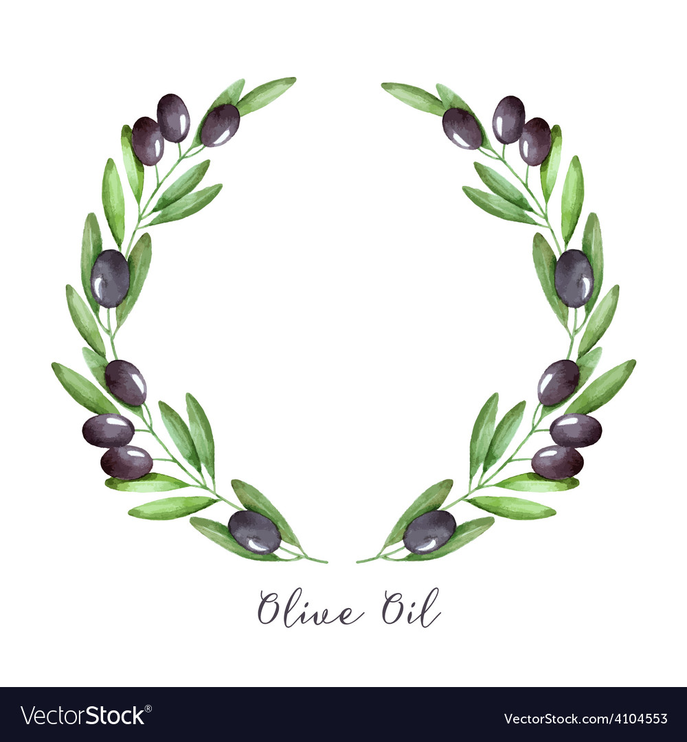 Watercolor olive branch vector image
