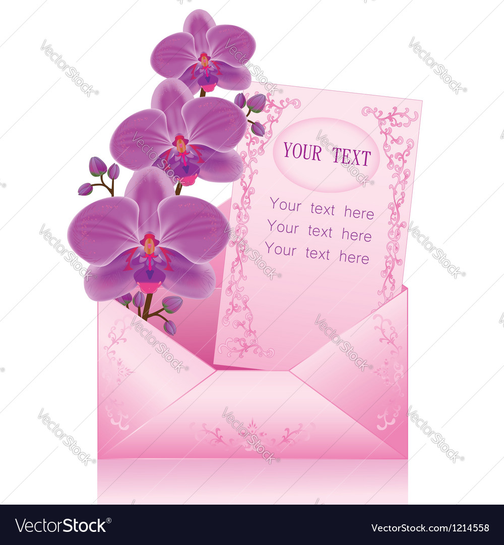Flower orchid in envelope on white background vector image