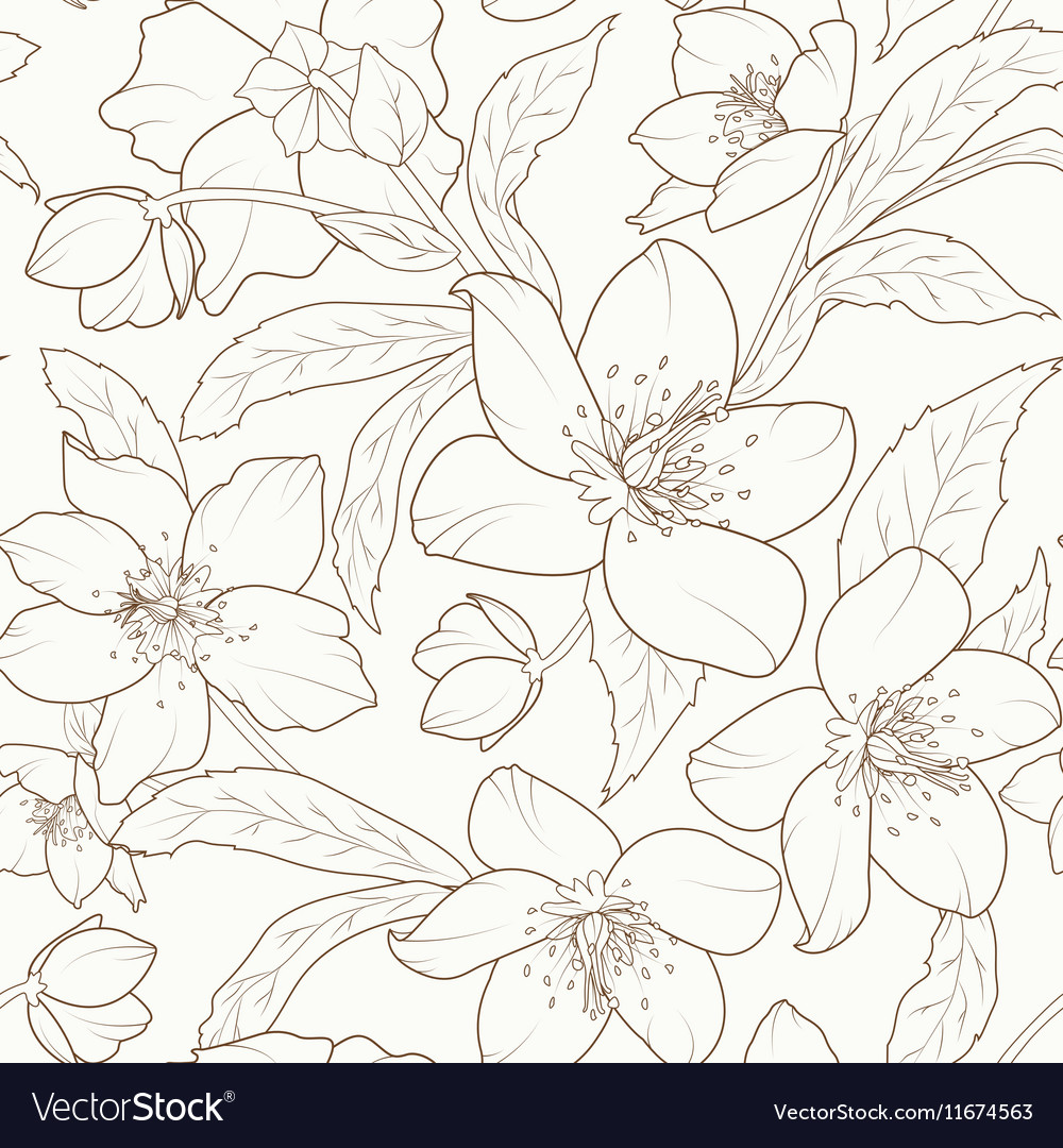 Hellebore winter rose flower foliage pattern brown vector image