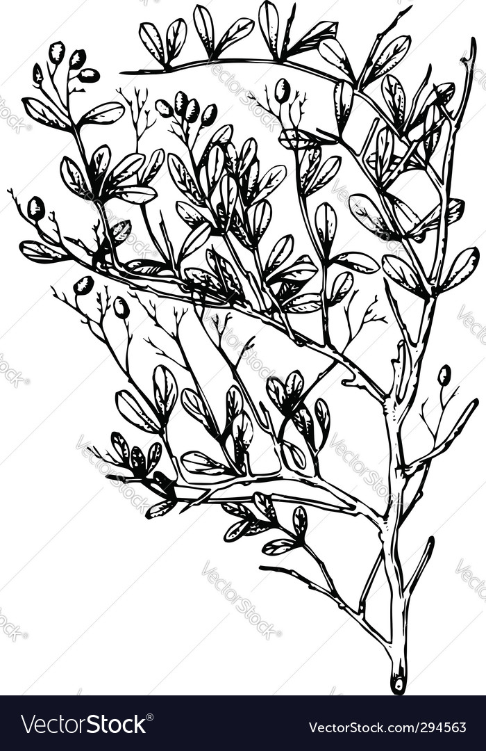 Plant nitraria
