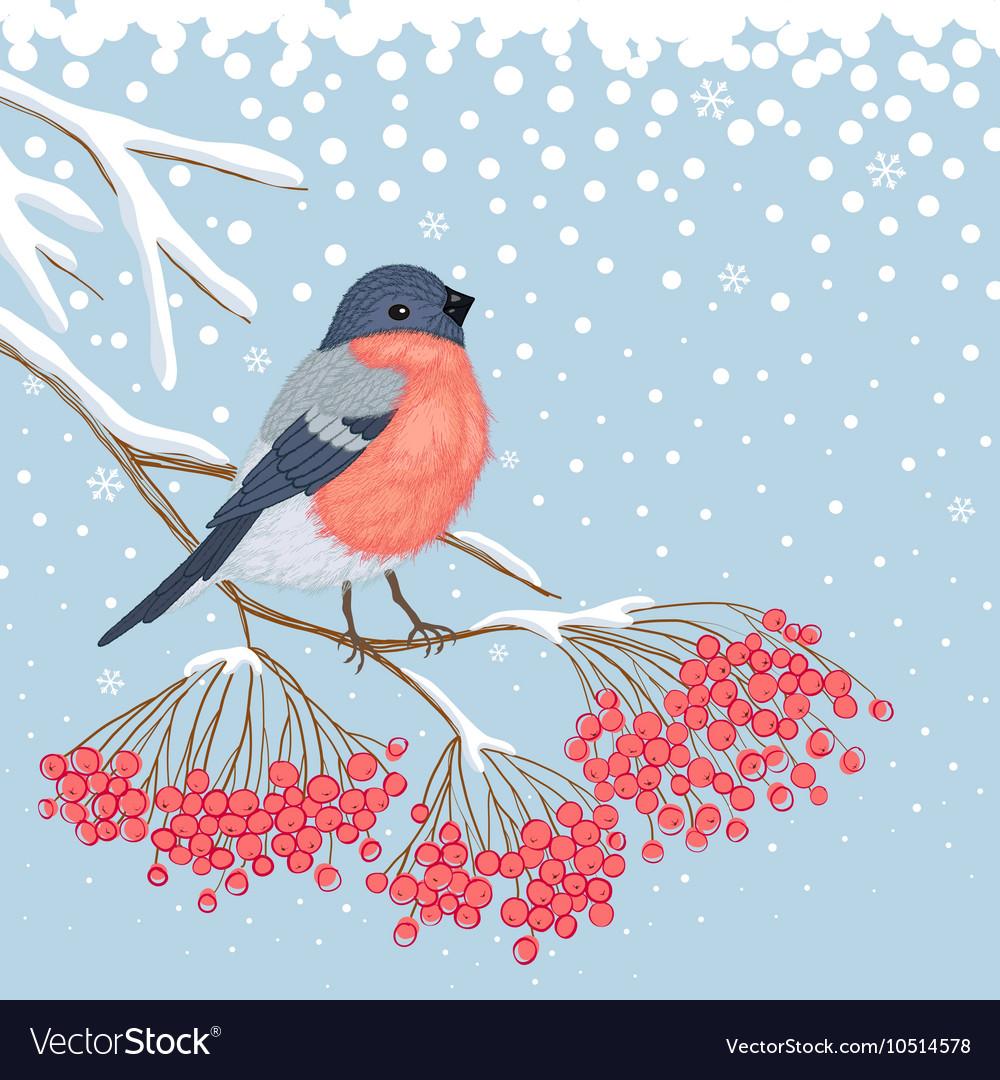 Winter Card with Bullfinch on the branch of rowan