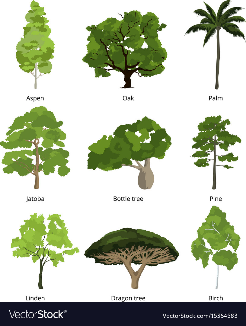 Join Tree-Nation