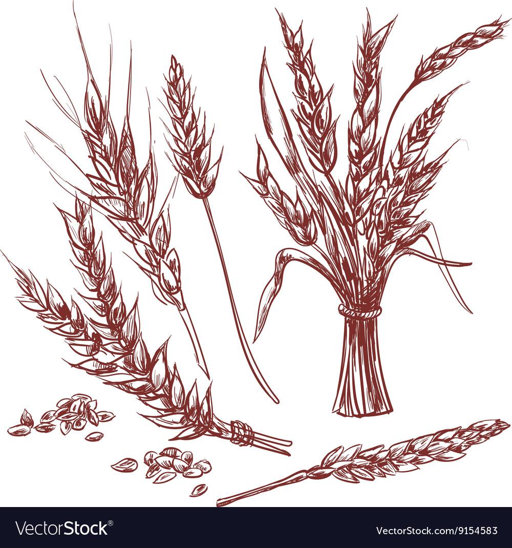 Hand drawn Wheat ears decorative icons set