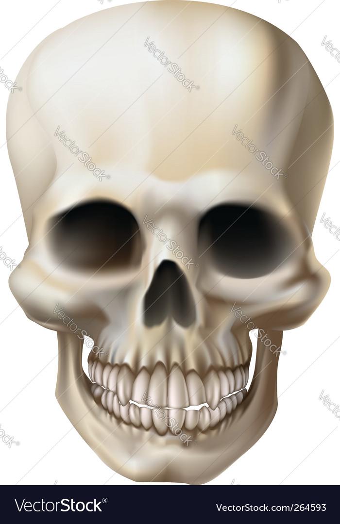 Human Skull Royalty Free Vector Image Vectorstock