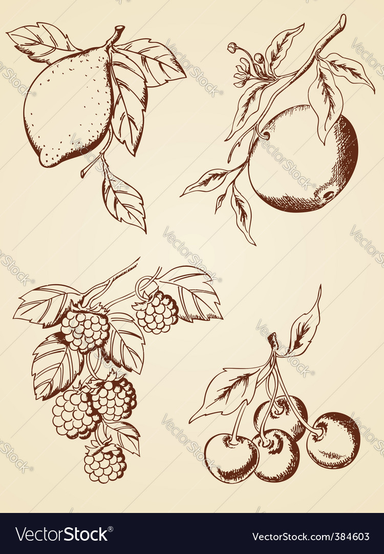 Hand drawn berries and fruits