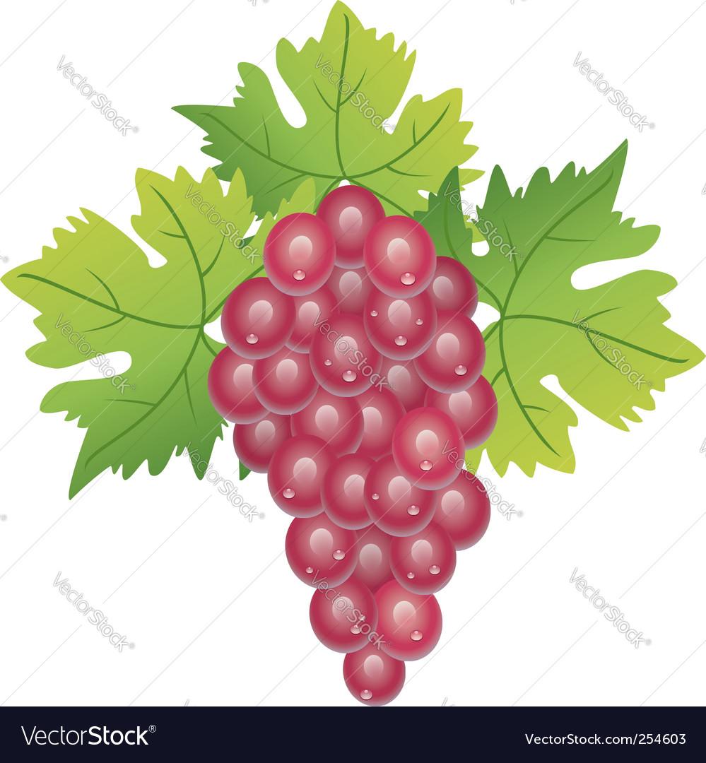 Purple grape