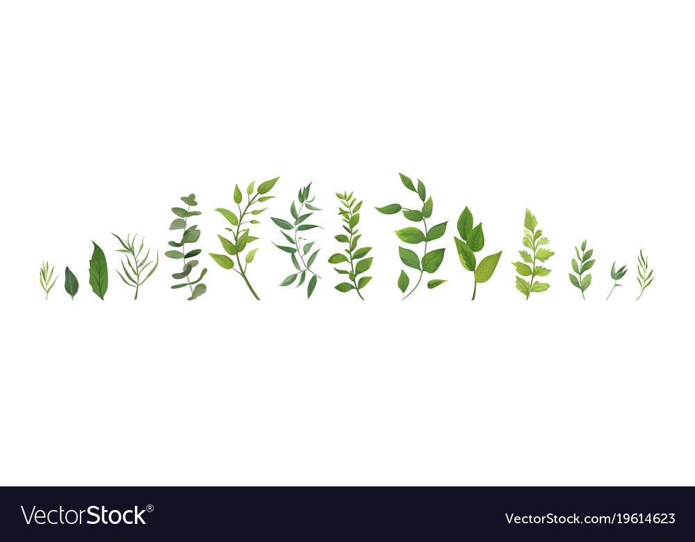 Designer elements set collection of green plants
