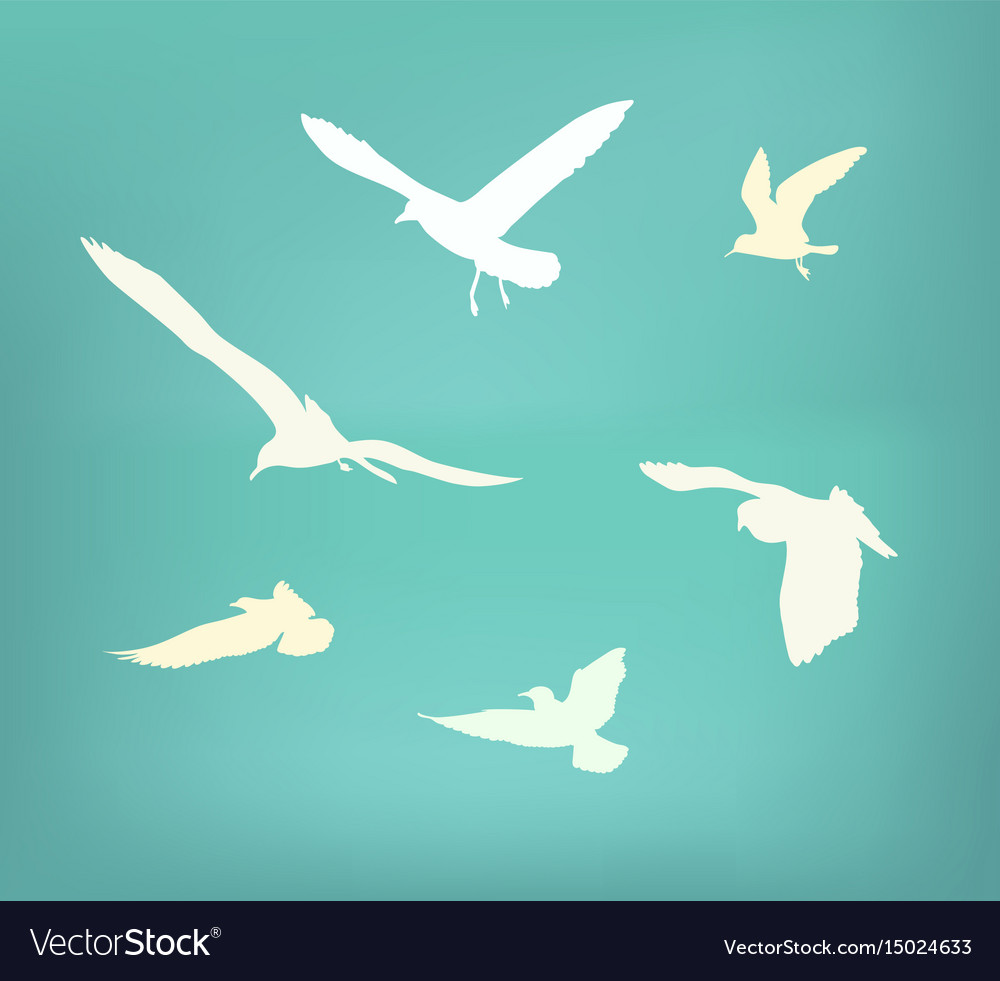 Seagull flying silhouette