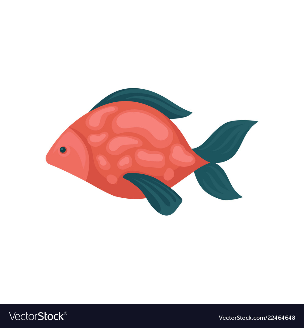 Aquarium Fish With Red Spotted Body And Blue Fins Vector Image