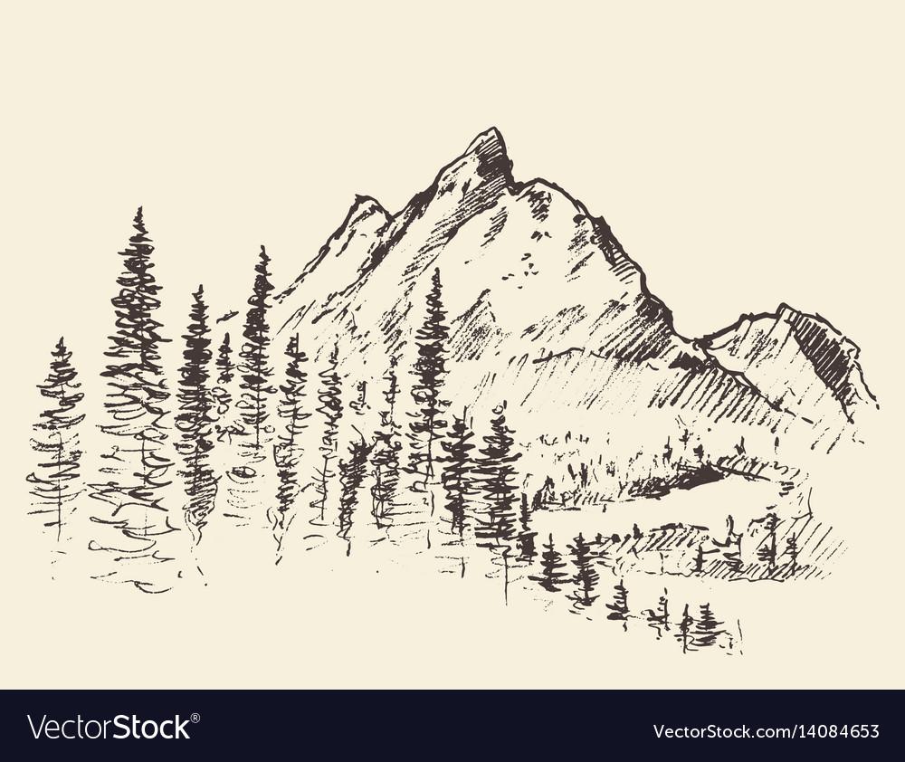Mountain peak pine forest hand drawn