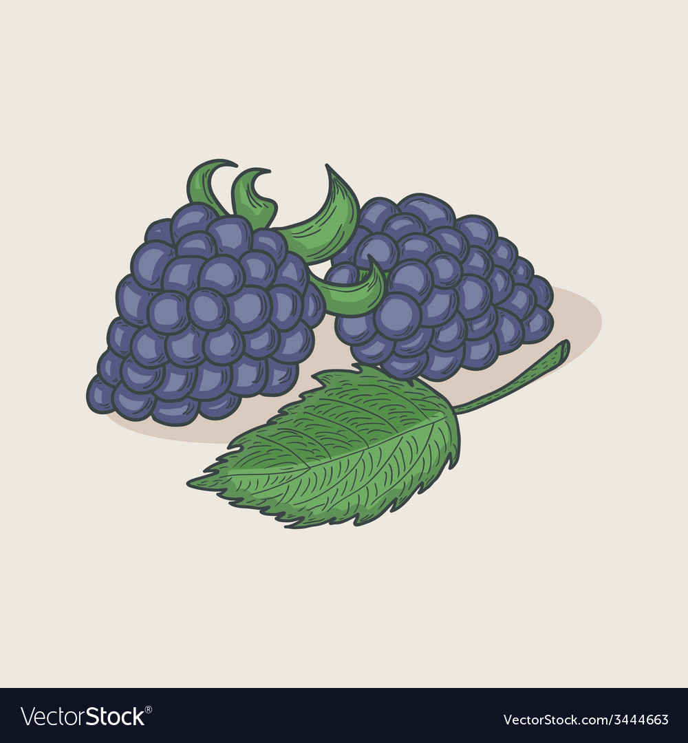 Doodle blackberries and leaf