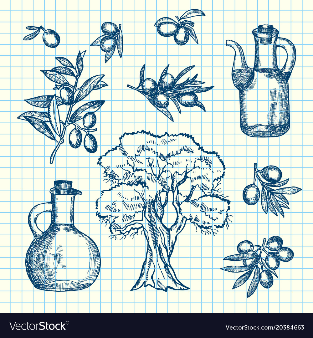Hand drawn olive branches bottles and tree