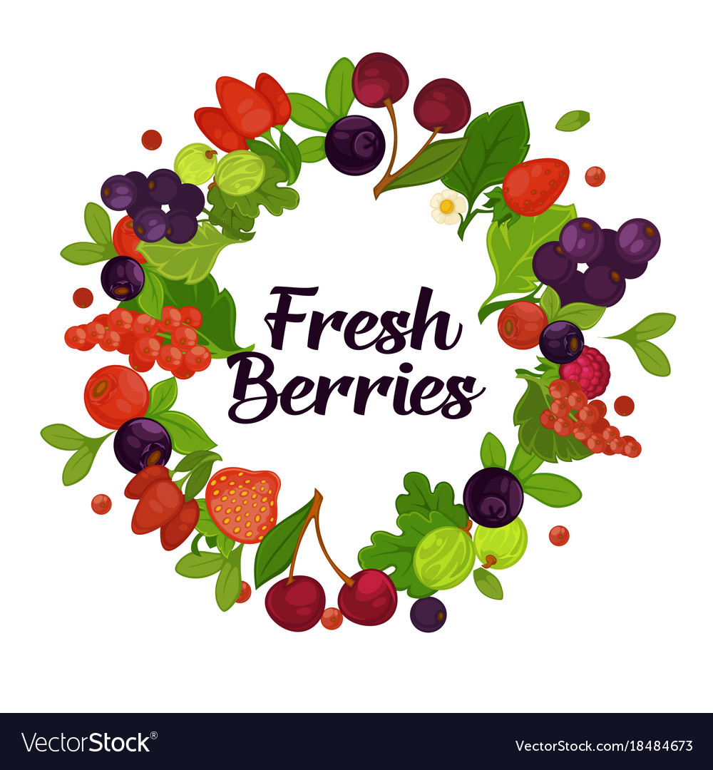 Fresh organic berries with leaves in circle vector image