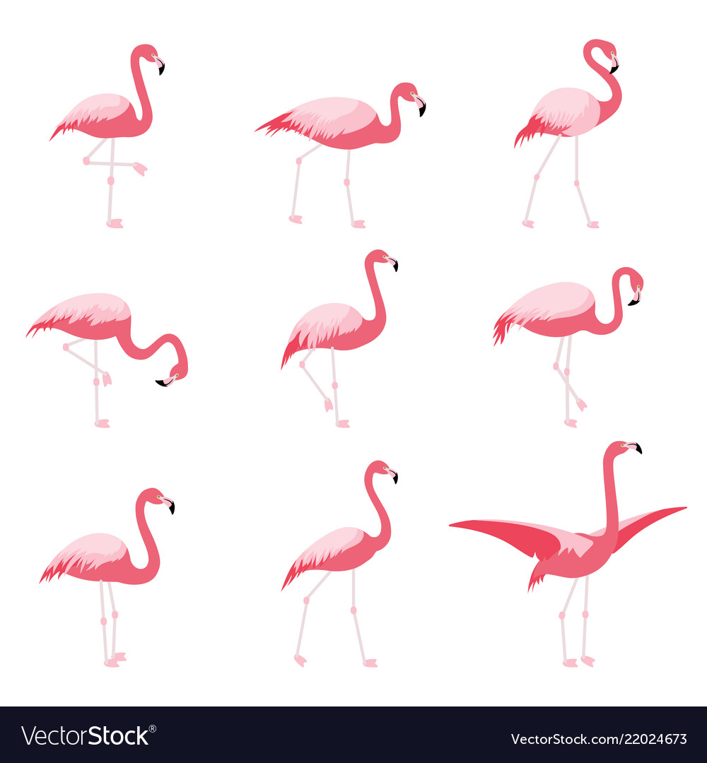 Set of isolated pink flamingoes tropical flamingo