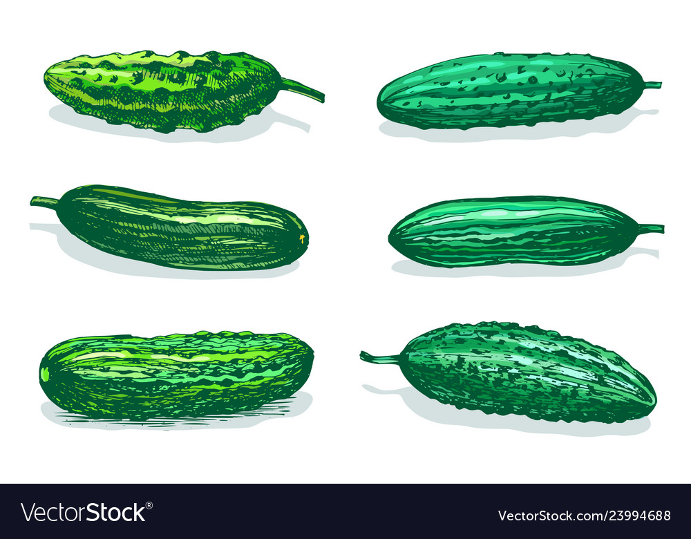 Cucumbers table color sketch