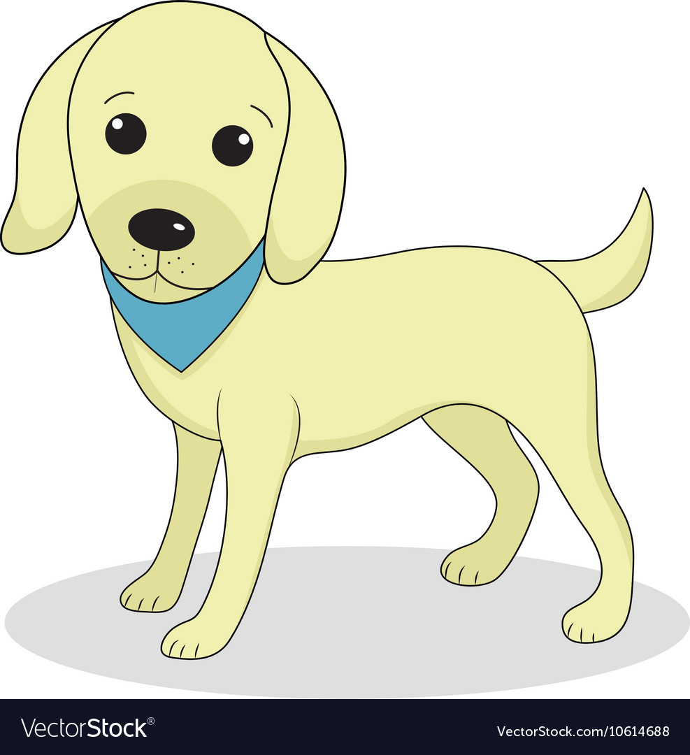 Labrador cute dog Cute white puppy Isolated on whi