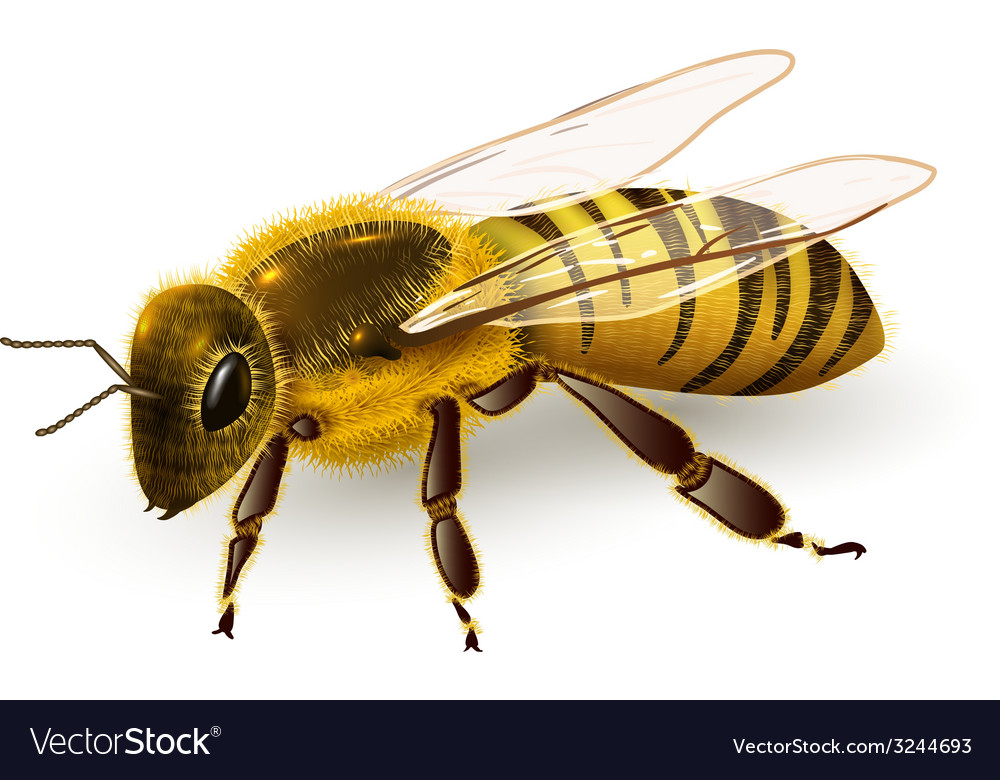 Wasp realistic isolated