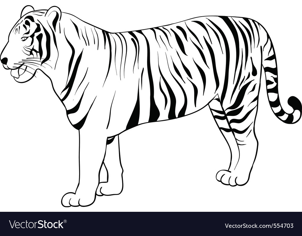 How to draw a realistic tiger for kids
