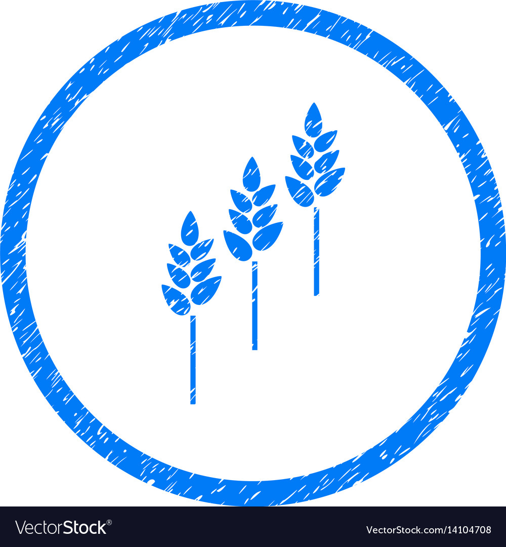 Wheat plants rounded grainy icon