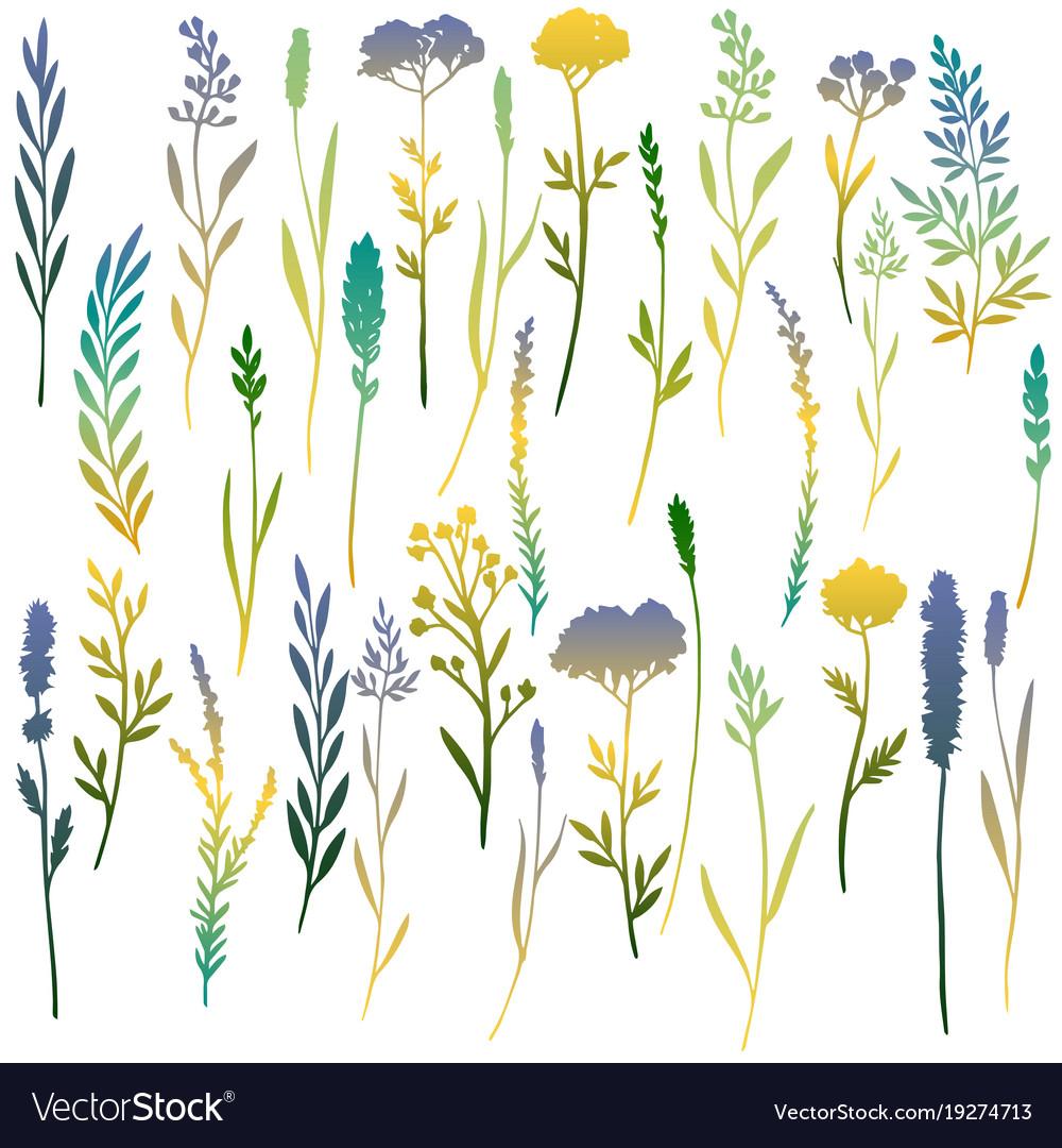 Hand drawn color floral elements