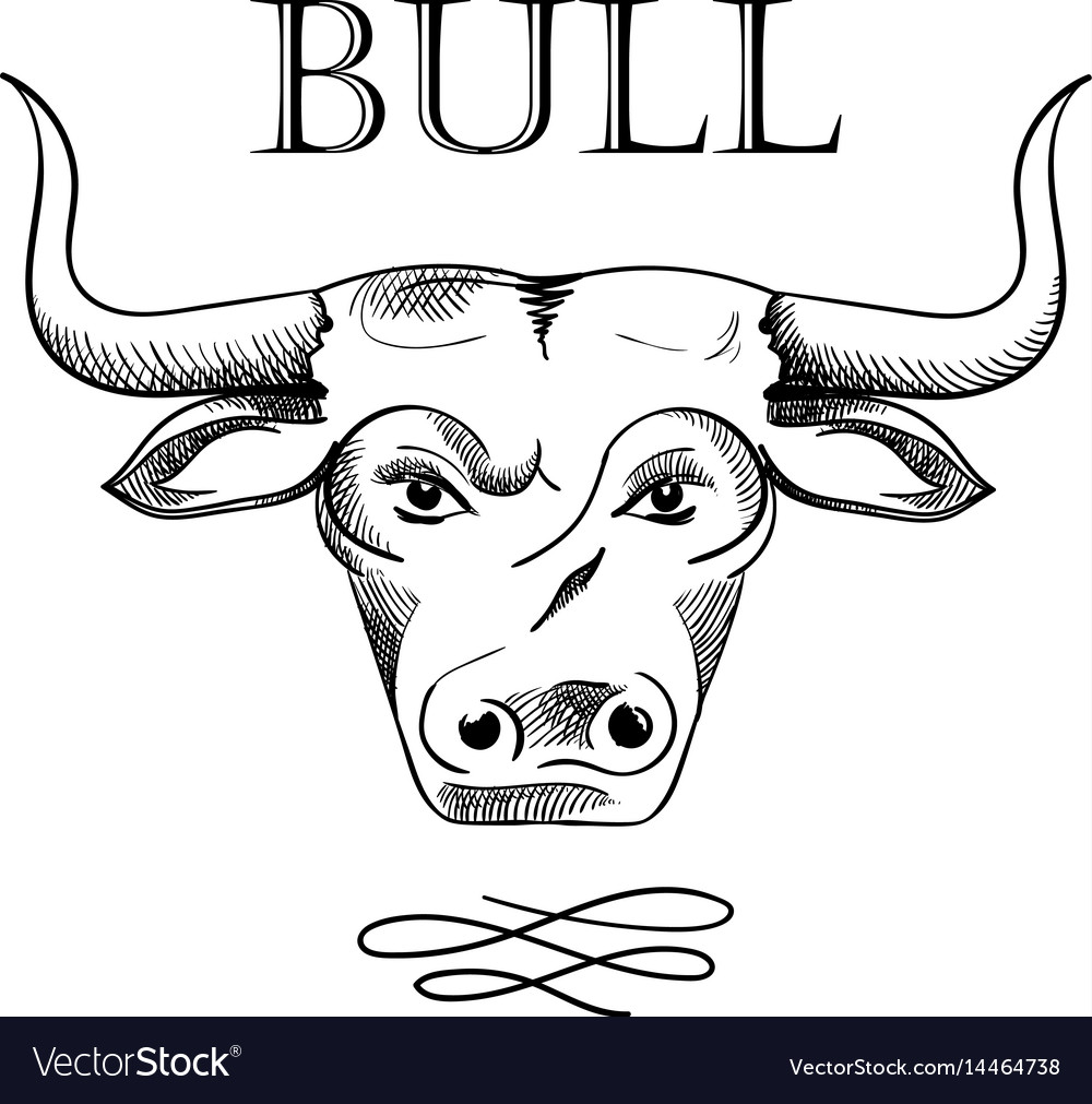 Hand drawn bull head sketch isolated on white