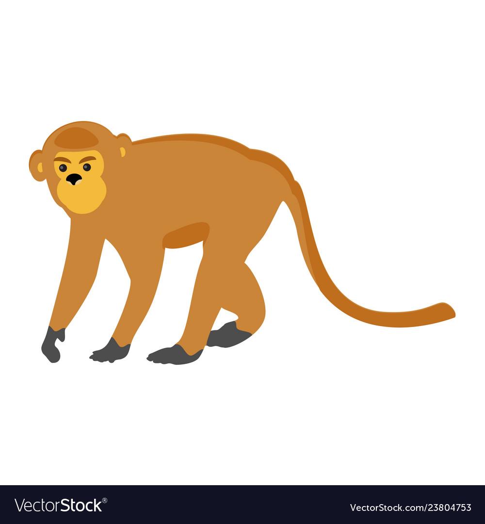 Animal zoo monkey