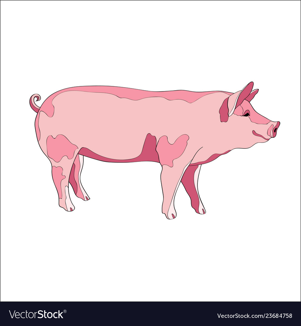 Pig side view color