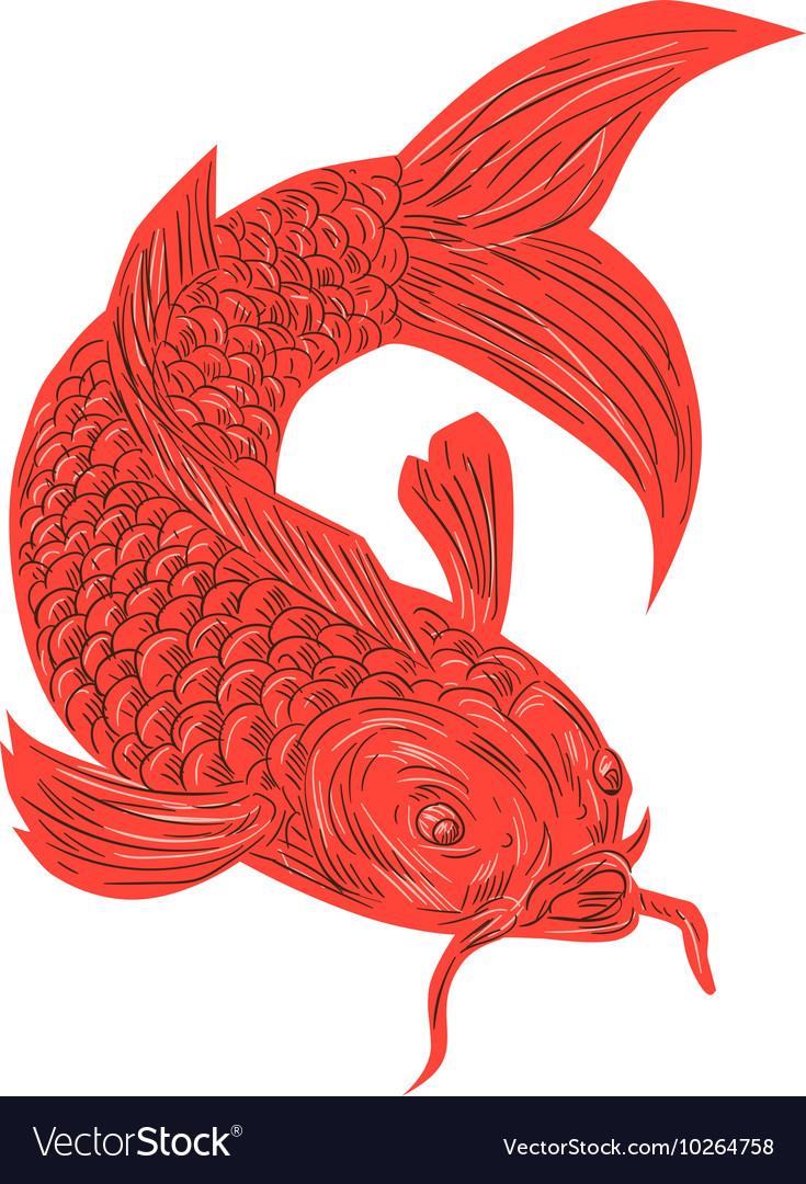 Red Koi Nishikigoi Carp Fish Drawing vector image