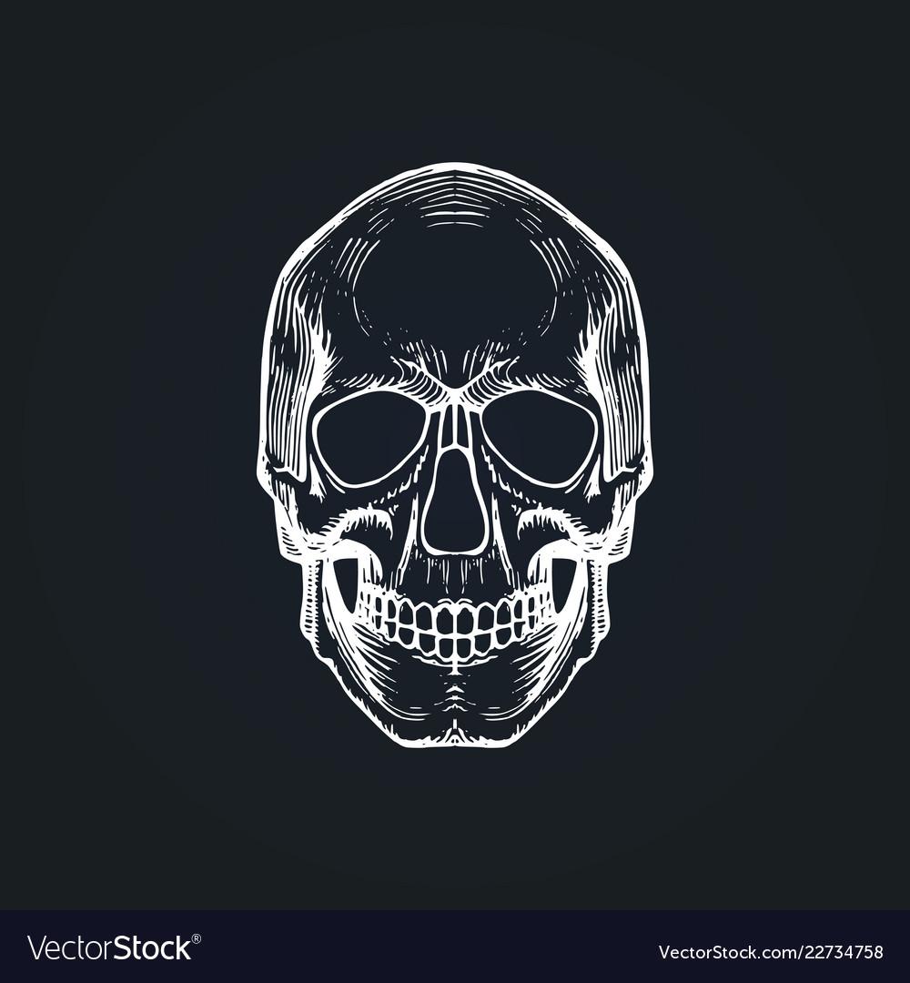 Skull in engraving style