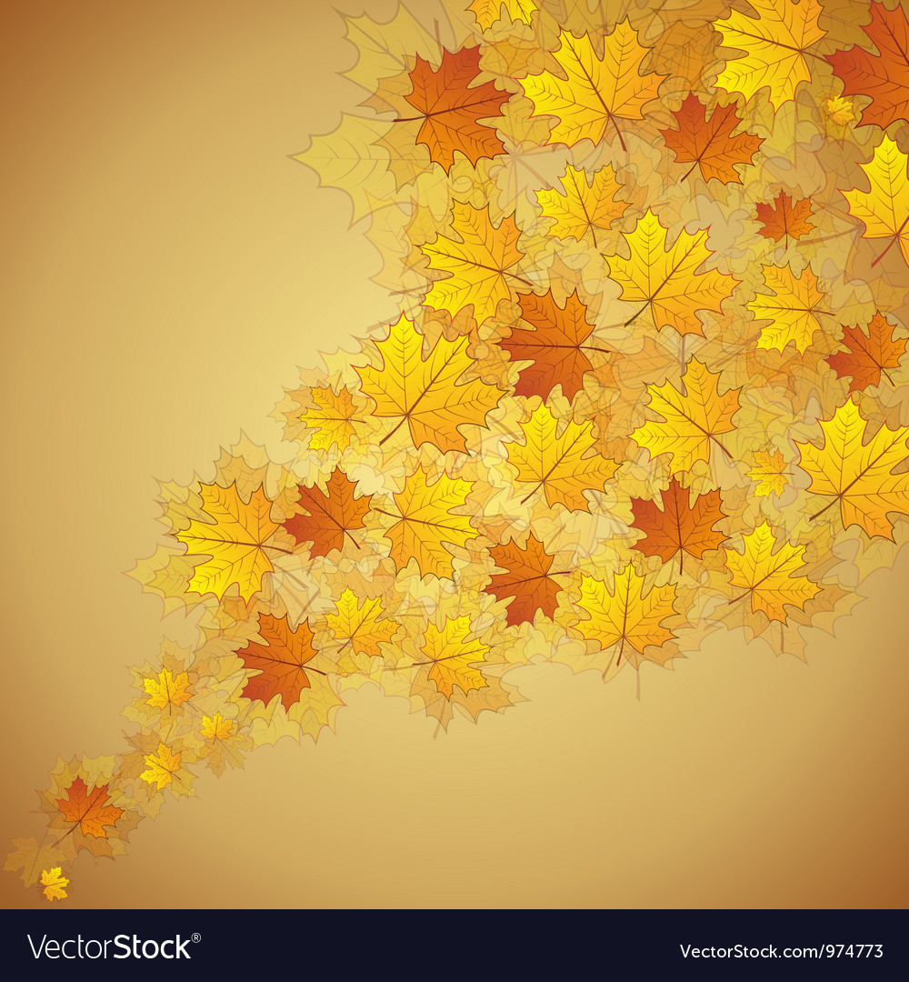 Autumn maple leaves stream vector image