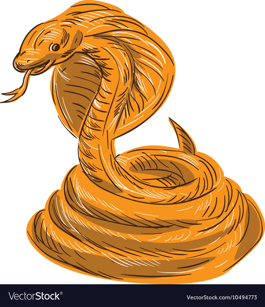 Cobra Viper Snake Coiled Drawing vector image