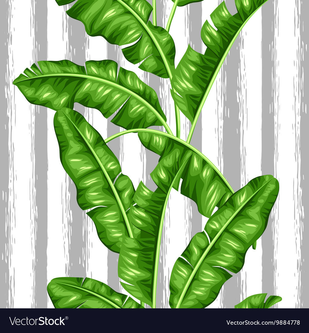 Seamless pattern with banana leaves Image of