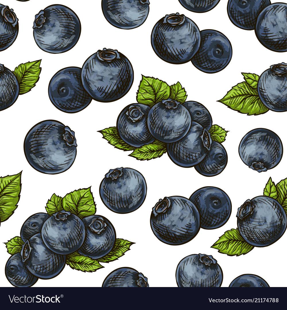 Seamless blueberry pattern