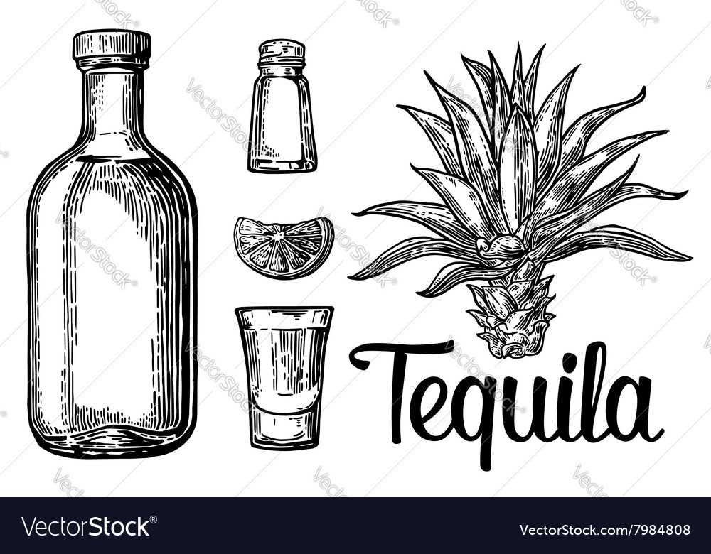 Glass botlle of tequila cactus salt lime