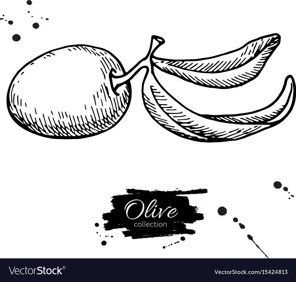 Olive branch hand drawn
