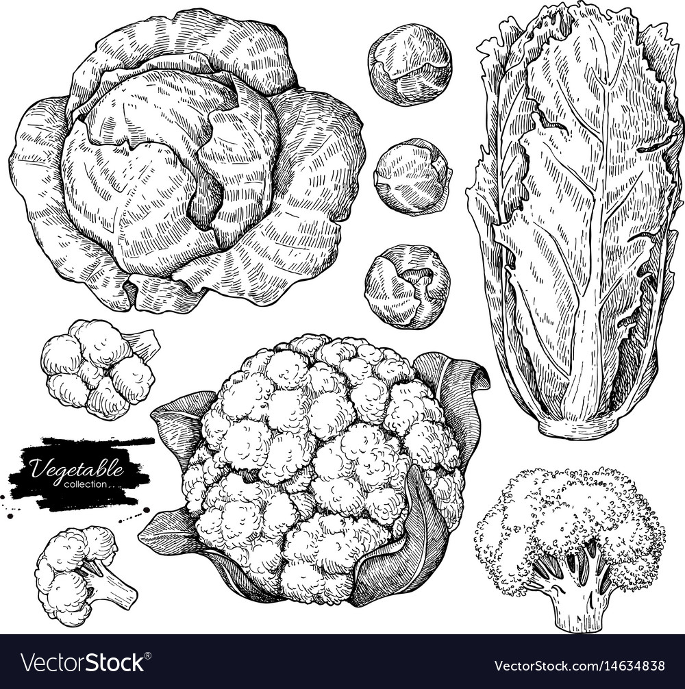 Vegetable hand drawn set isolated