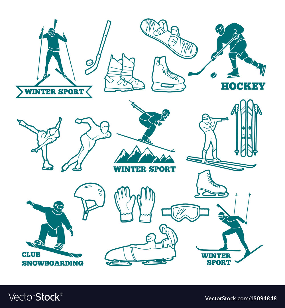 Biathlon sled skis and other winter sports vector image