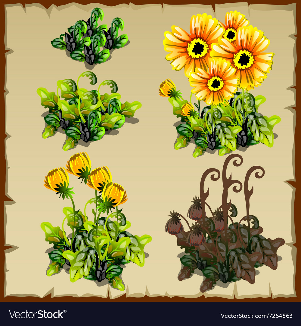 Stages of growth flowers planting and withering