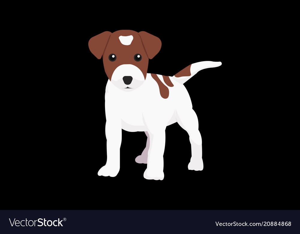 Little dog with isolated black background