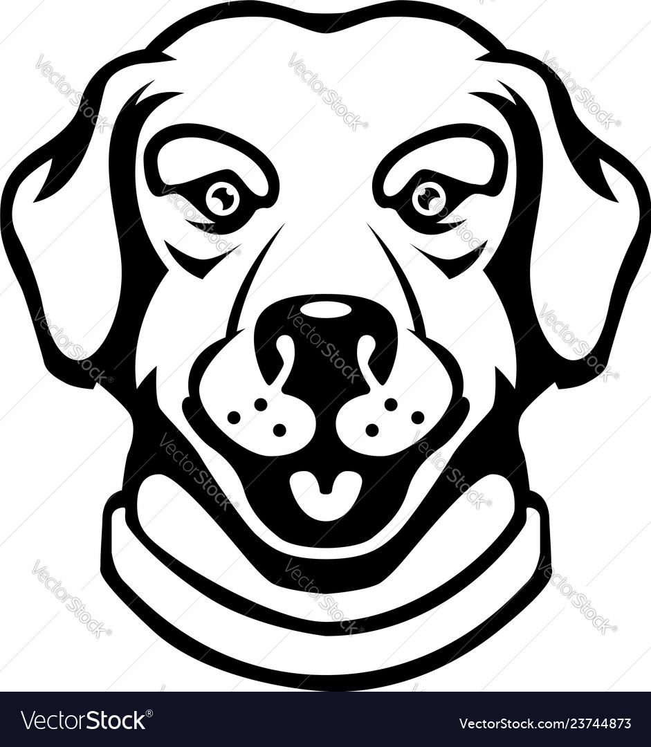 Labrador head in engraving style design element