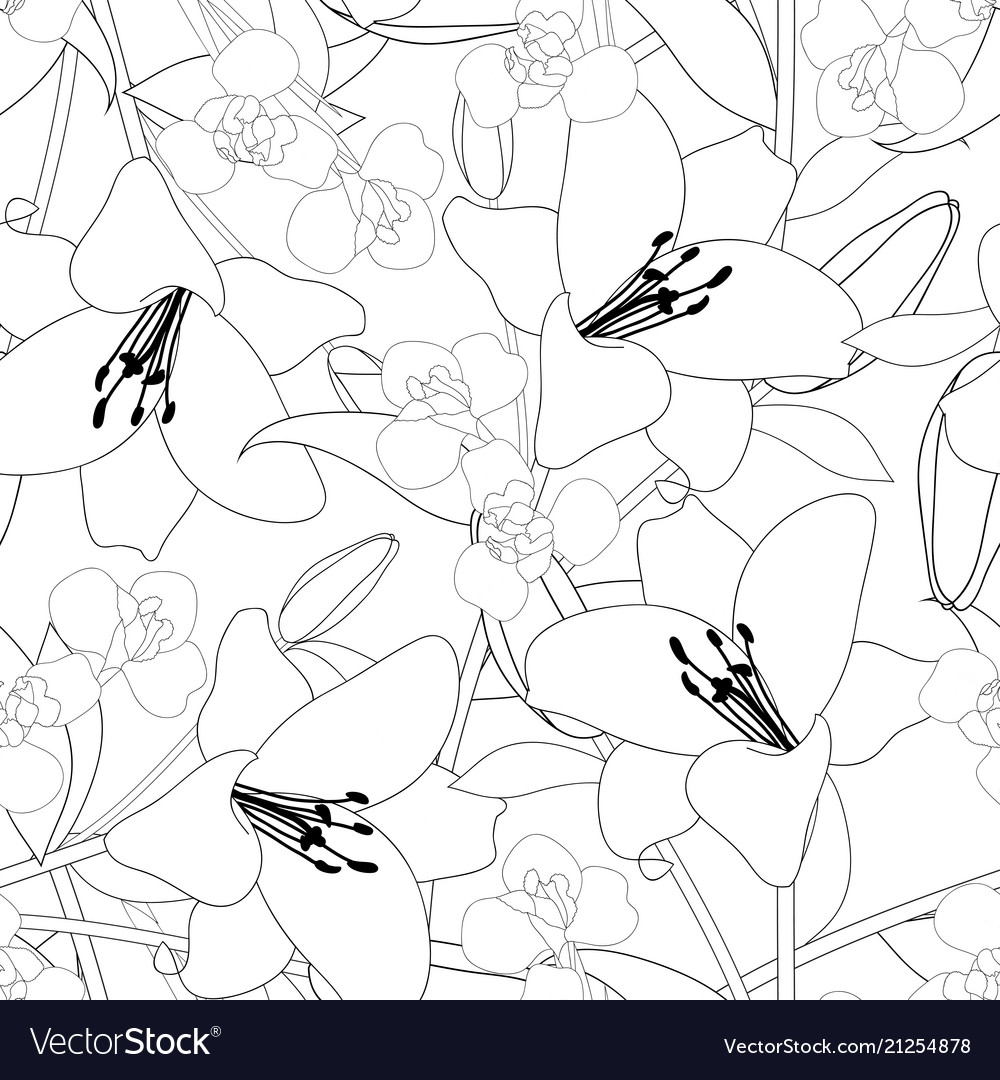 Lily and iris flower outline on white background vector image
