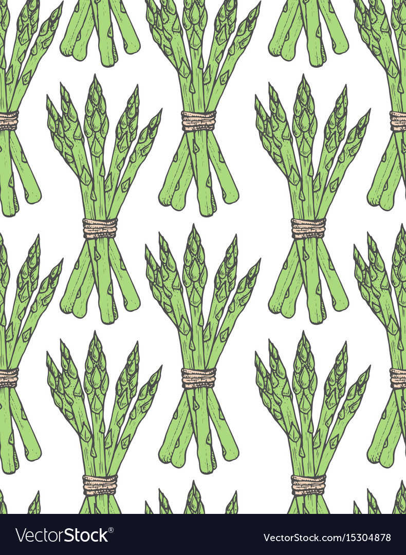 Seamless pattern with sketch style asparagus bunch