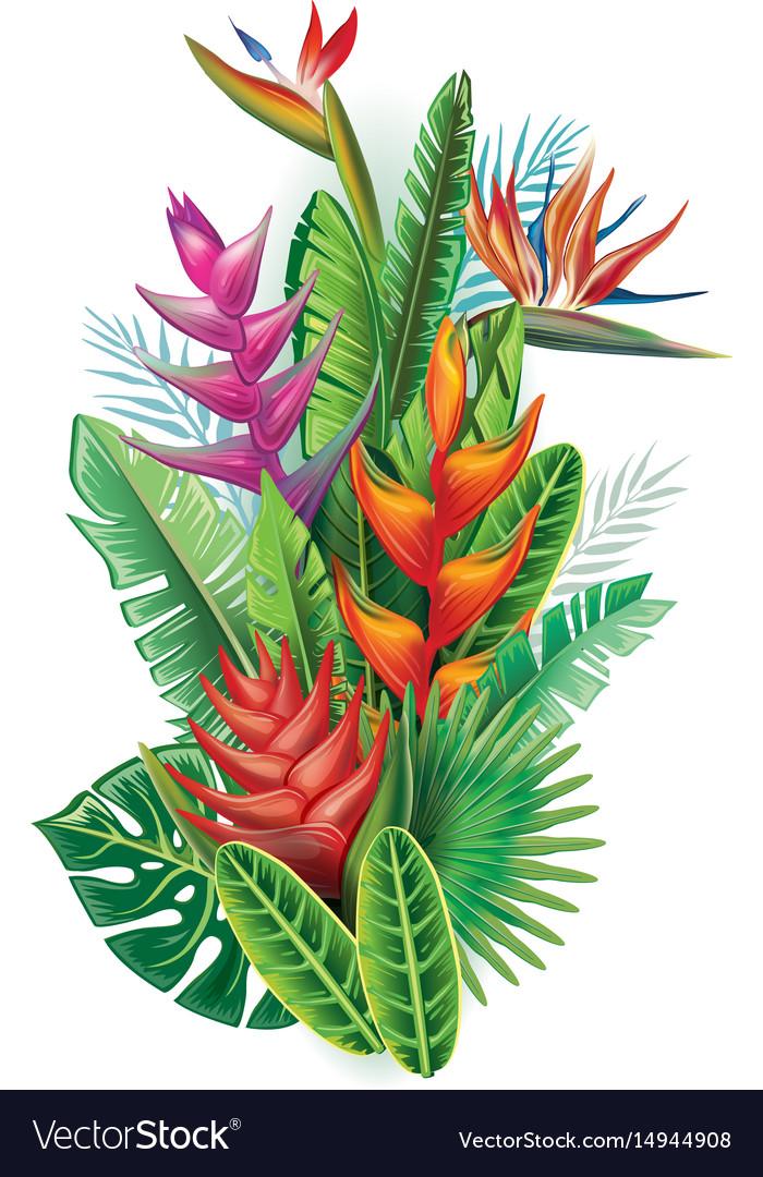 Arrangement from tropical plants